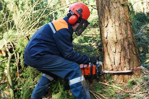 Chainsaw in Use